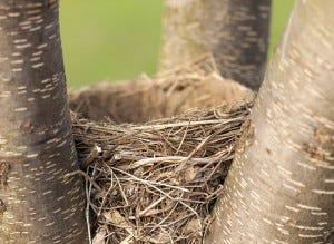 spring bird feeding nests