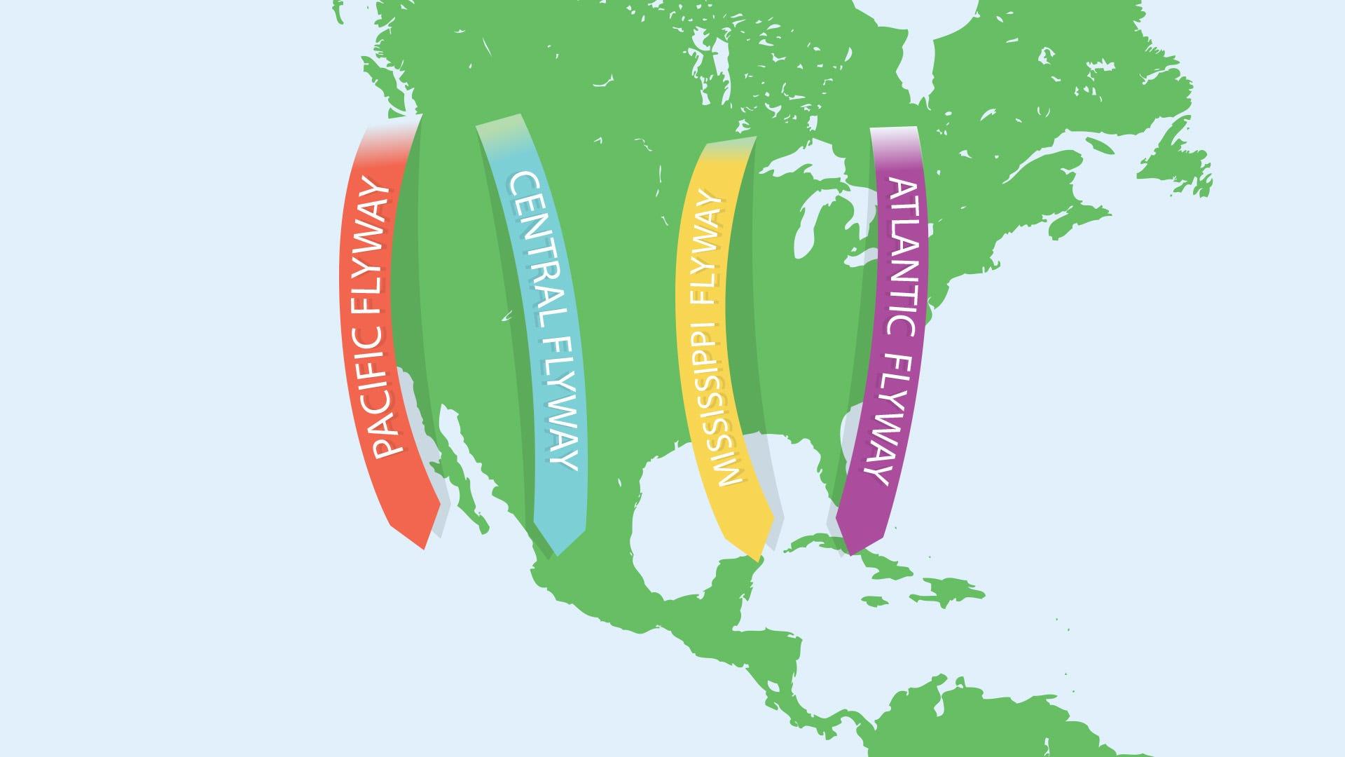 North American Bird Migration: The 4 Flyways