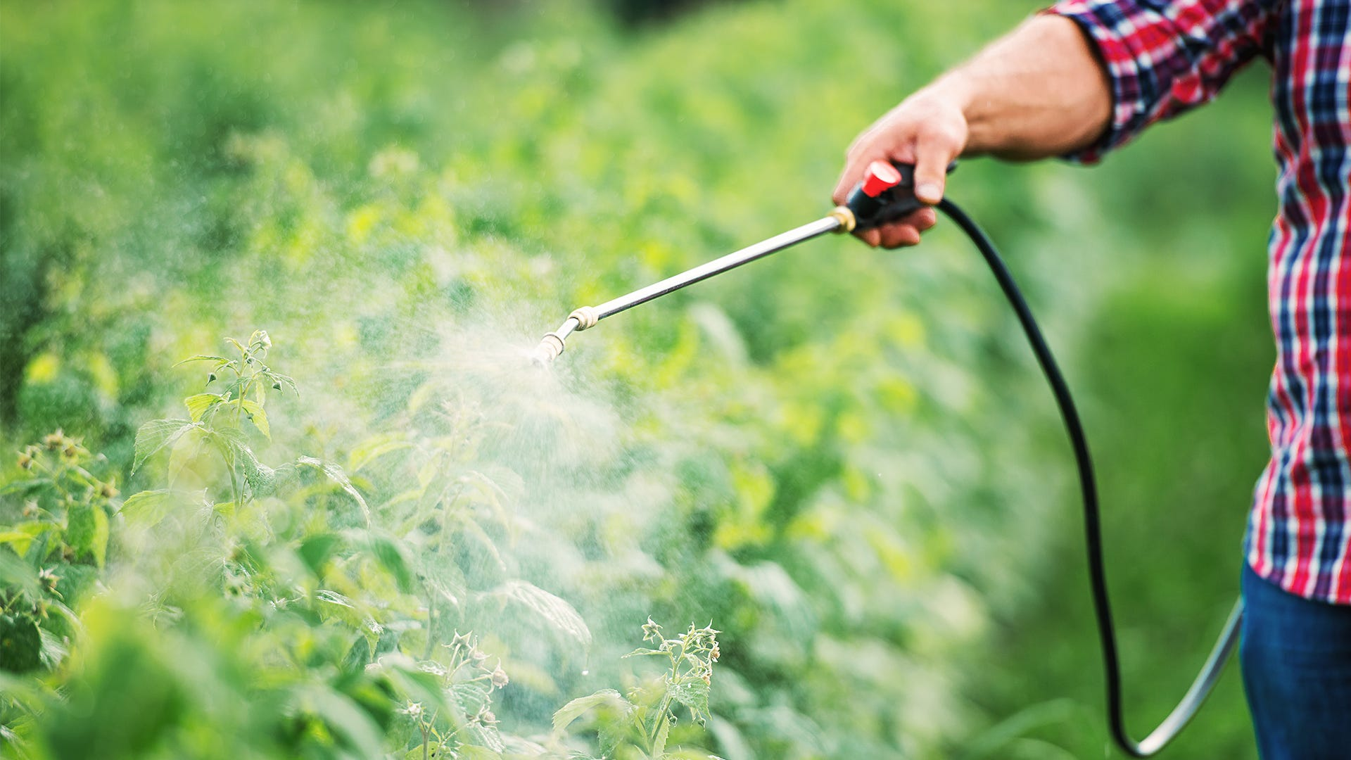 Save Our Birds: Prevent Harmful Pesticide Use