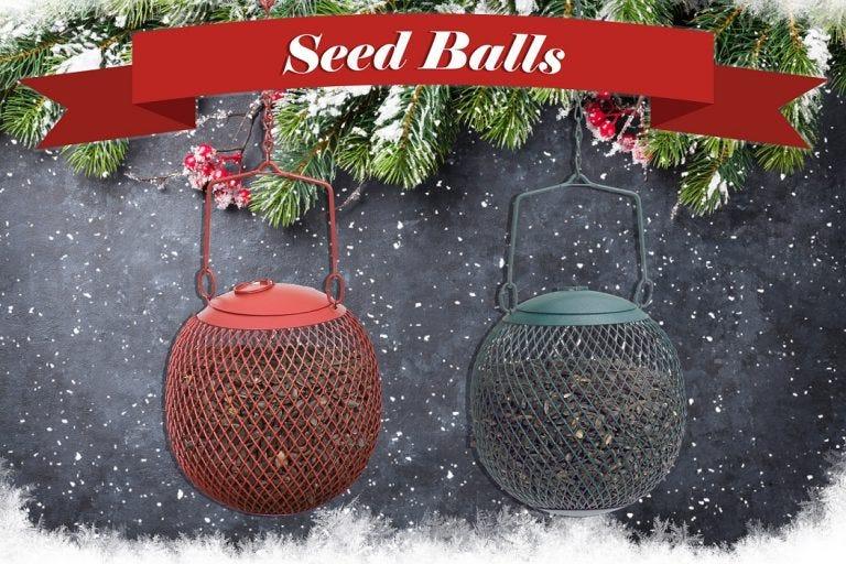 seed ball feeders