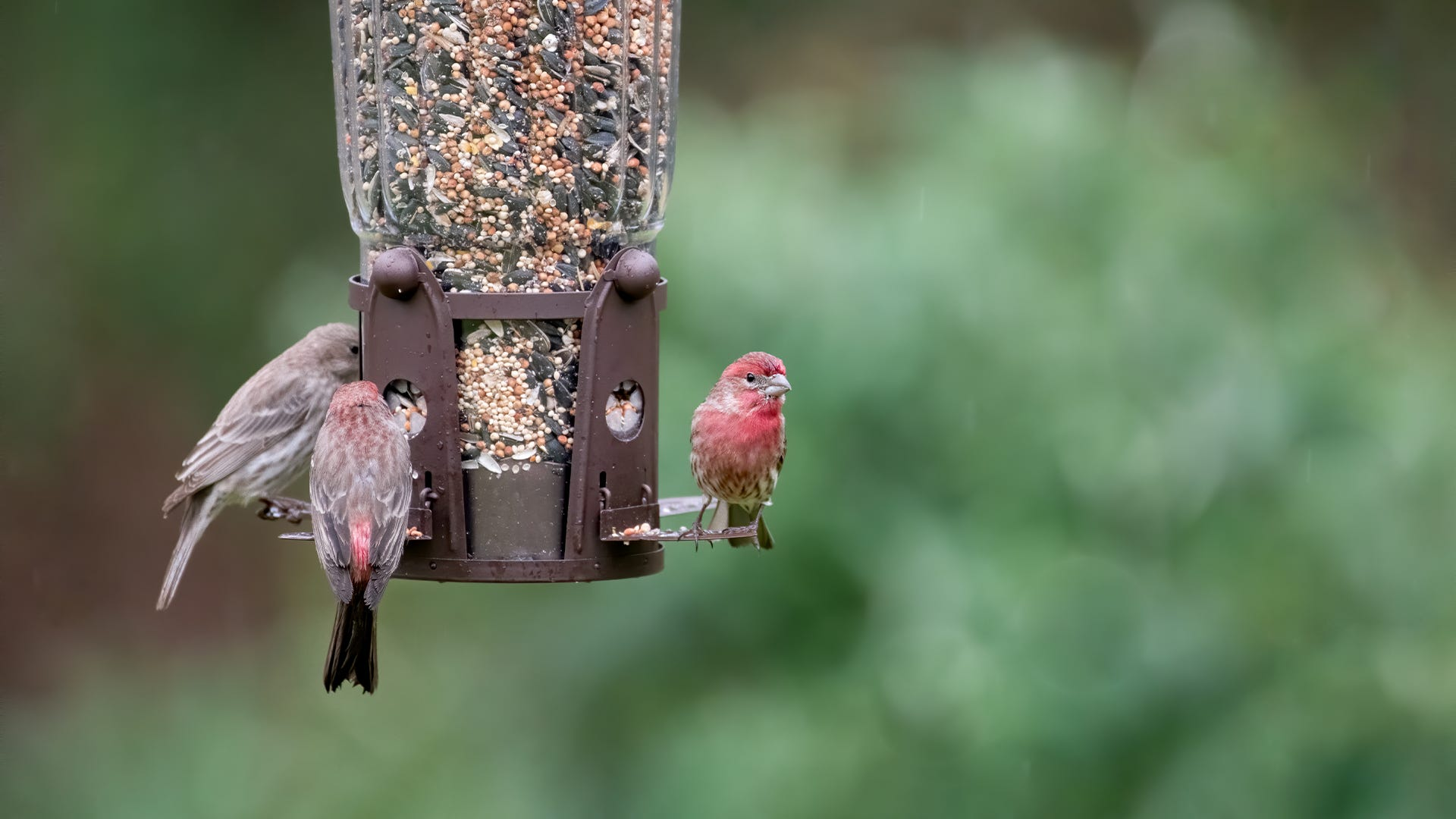 6 Tips to Keep Birds Coming Back