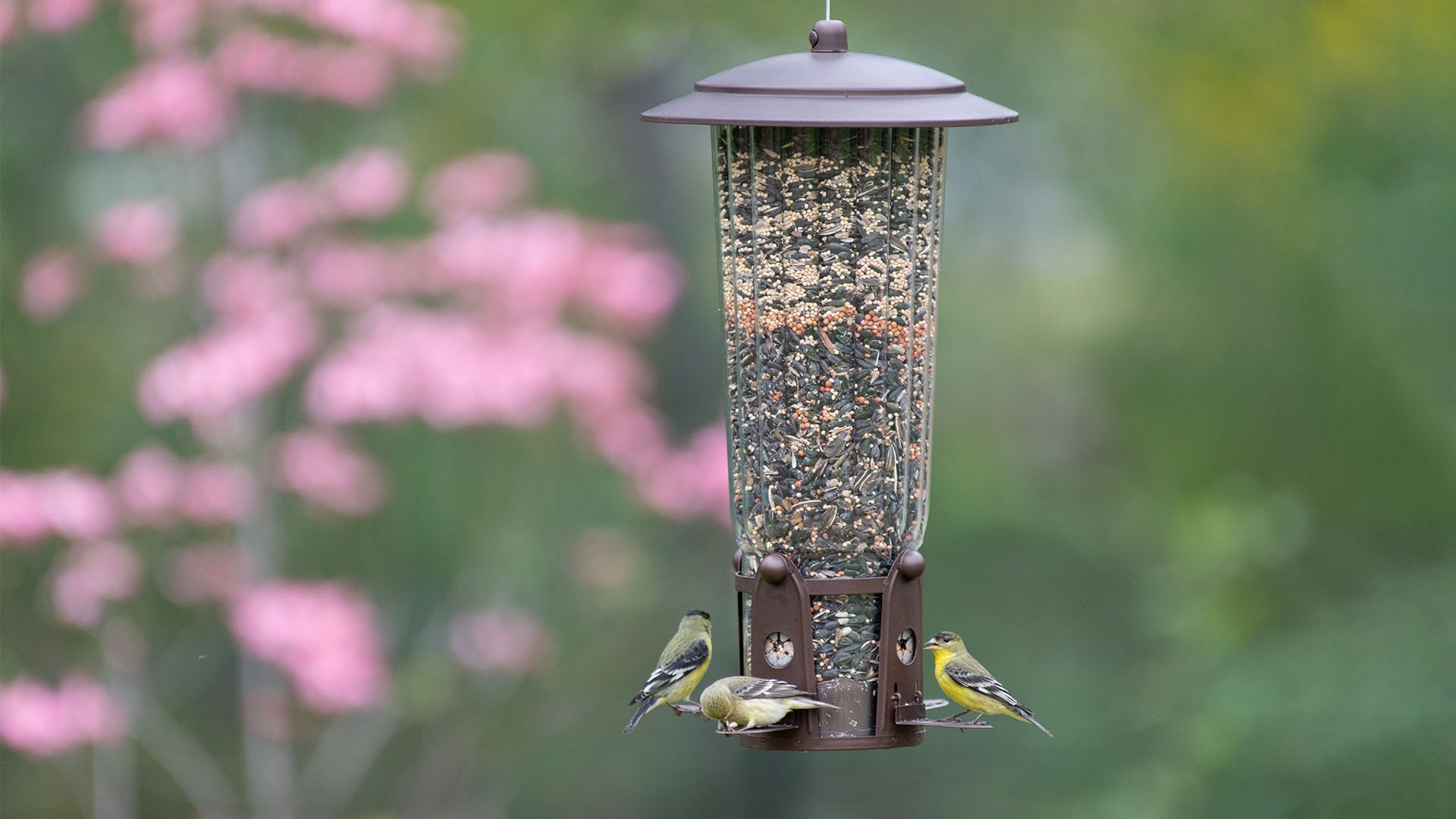 Top 5 Things to Consider When Buying A Bird Feeder
