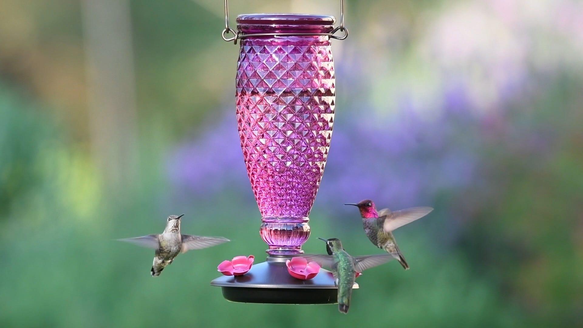 Where Are My Hummingbirds