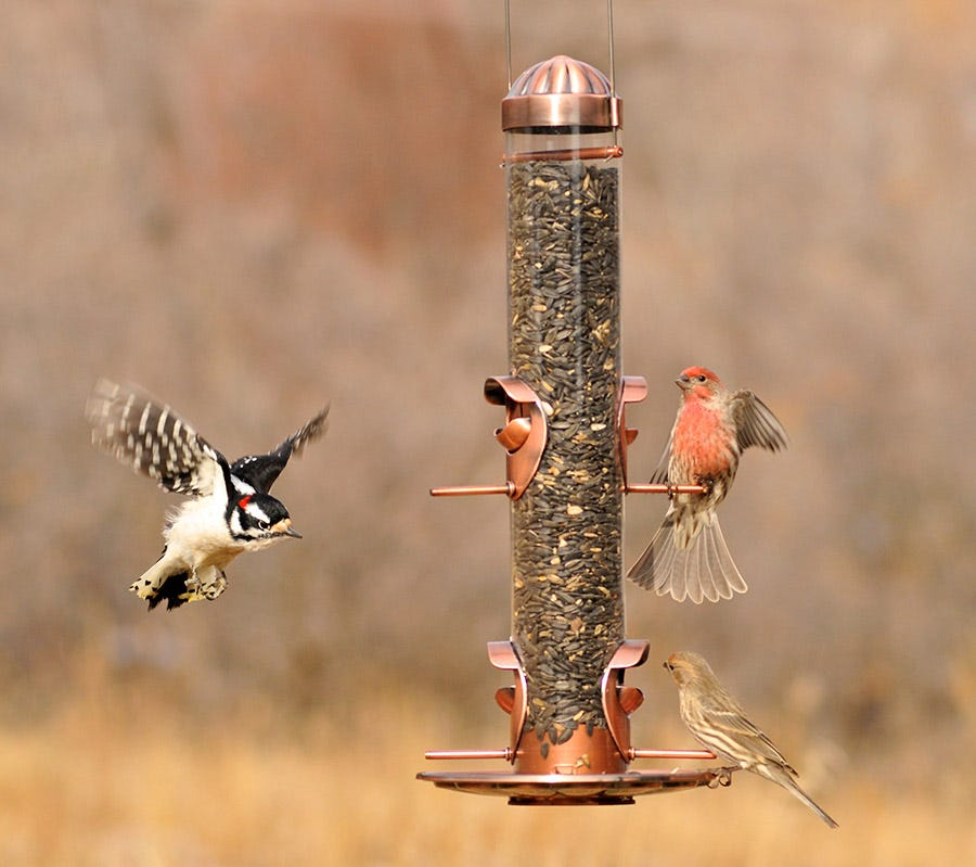fall bird feeding