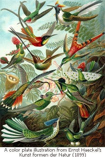 A painting of hummingbirds surrounding trumpet type flowers