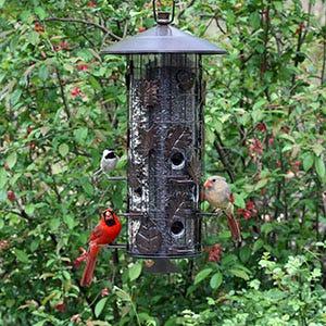 Squirrel Resistant Bird Feeder
