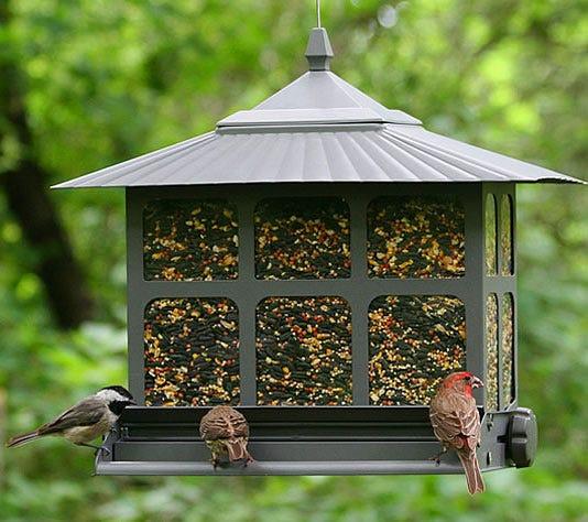 birds at squirrel-be-gone feeder