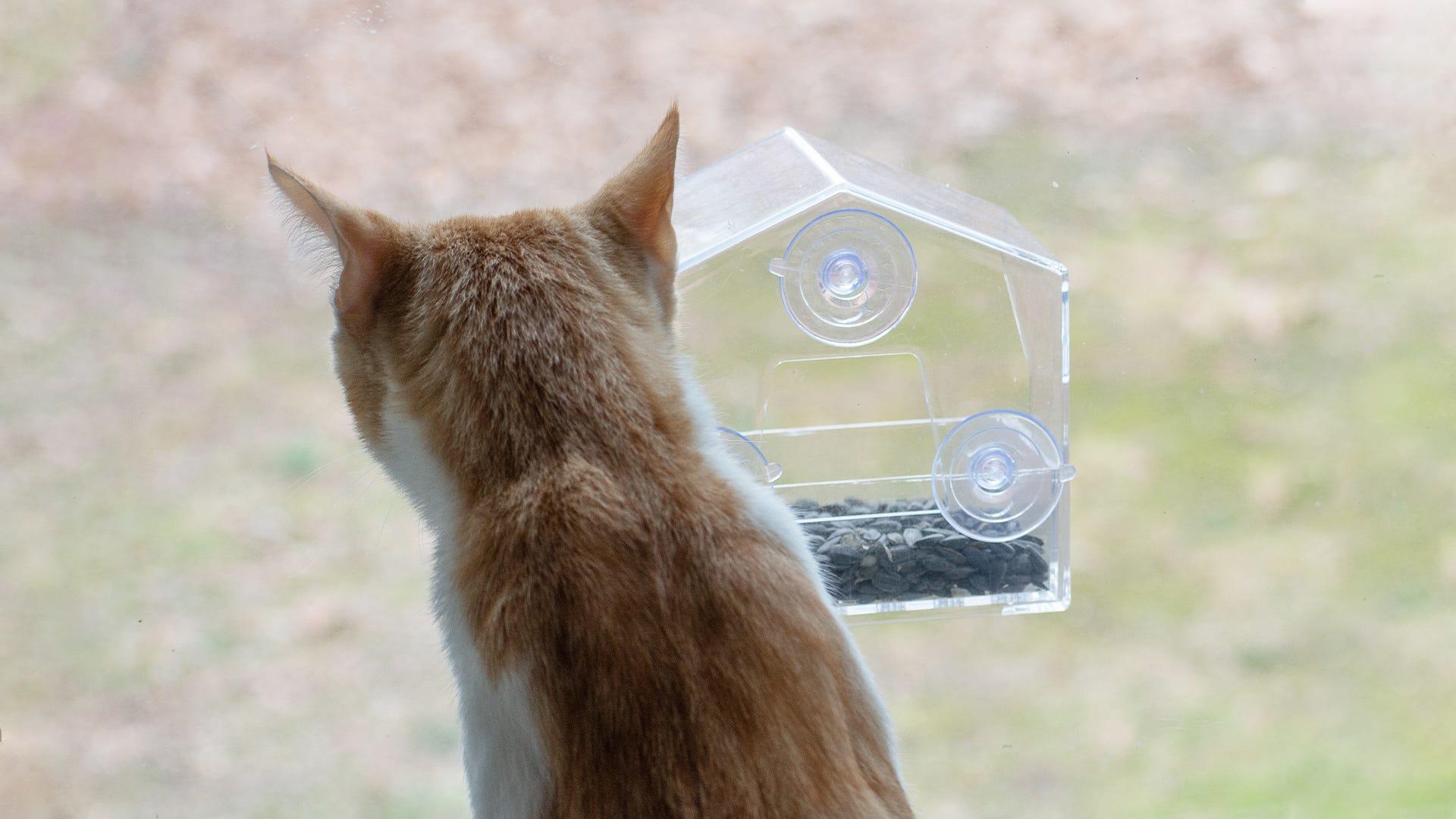 cat looking at bird