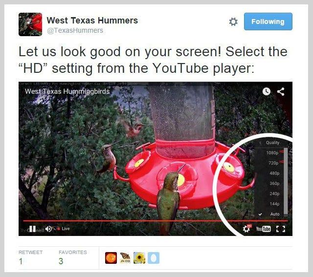 west texas hummingbird twitter