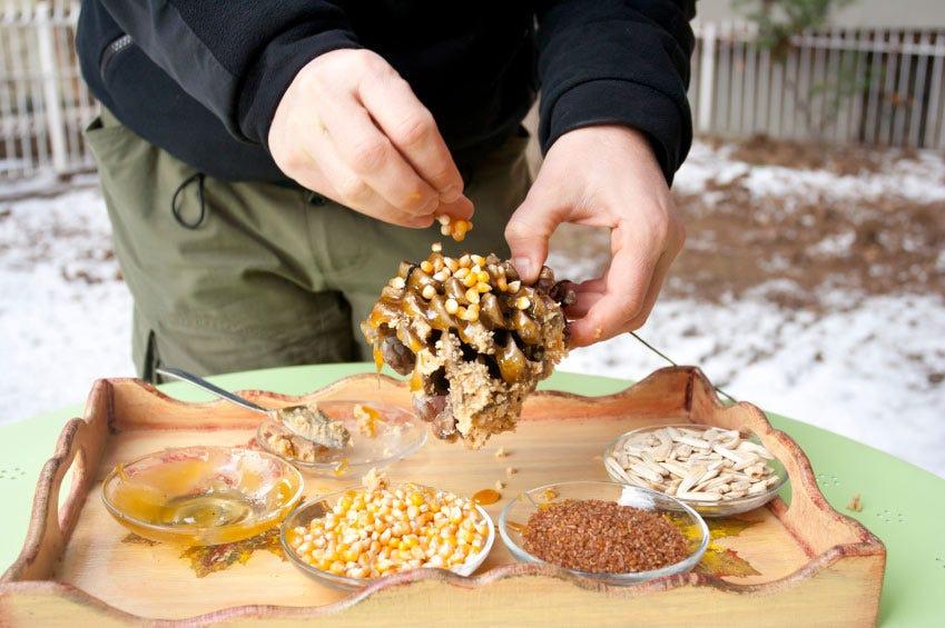 pine cone bird feeders diy