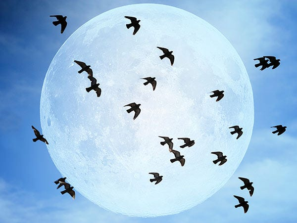 Birds or bats? Some times its hard to tell which you are seeing at night. Remember bats have a very erratic flight pattern as they hunt bugs.