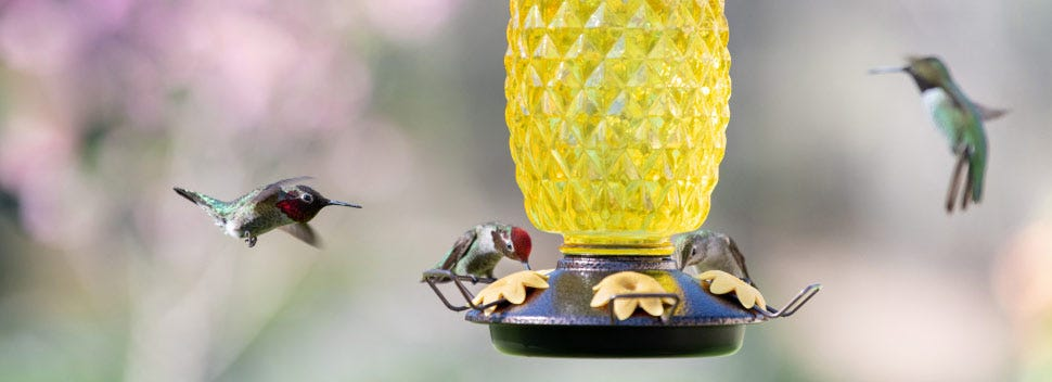 Keep your hummingbird feeders high off the ground to protect them from predators.