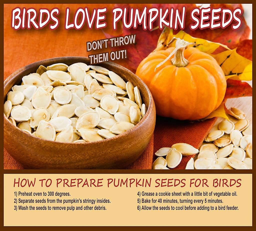 pumpkin seed recipe graphic