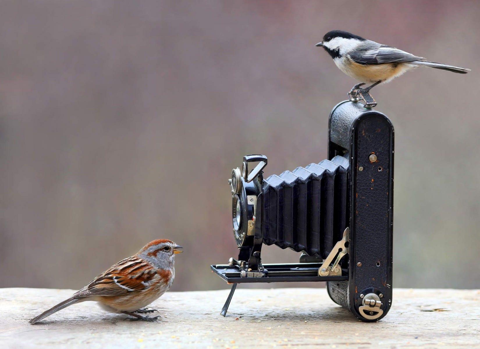 birds on antique camera