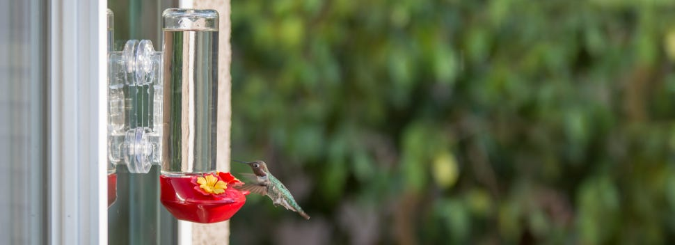 Hummingbird safety should be a top priority. Window feeders actually convince hummers to slow down and investigate.