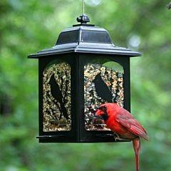 Perky-Pet® Birds and Berries Lantern Feeder