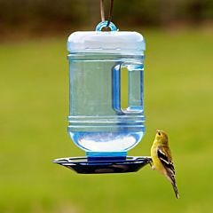 Perky-Pet® Water Cooler Bird Waterer