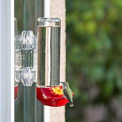 Perky-Pet® Window-Mounted Glass Hummingbird Feeder